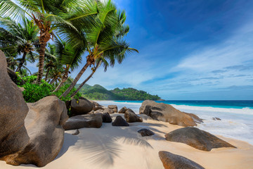 Tropical exotic beach and coconut palms