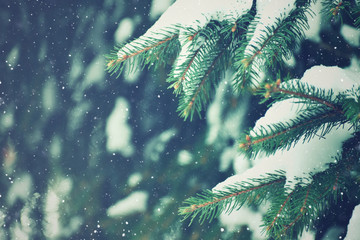 Winter Evergreen Christmas Tree Pine Branches With Snow and Snowflakes