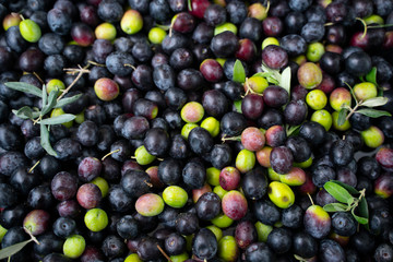 Background of olives close up
