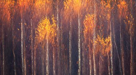 Jesienny teksturalny sceniczny tło z plamą ruchu, tonujący w stylu vintage