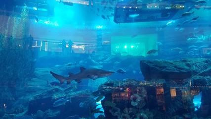 Dubai Birj Fishtank