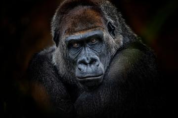 gorilla look