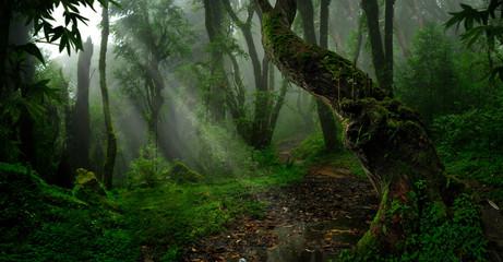 Las deszczowy Azji Południowo-Wschodniej z głęboką dżunglą