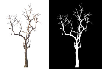 isolated death tree on white background