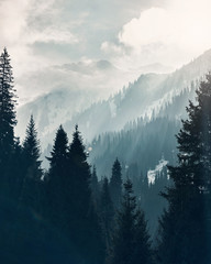 Mountain forest at fog sunrise background