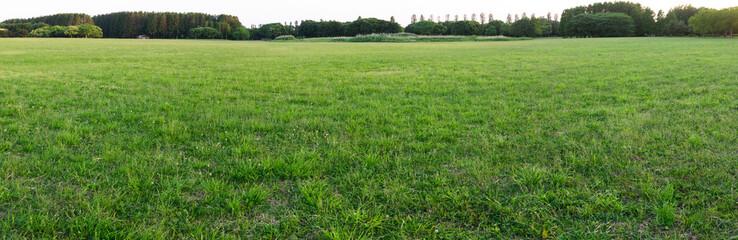 芝のパノラマ