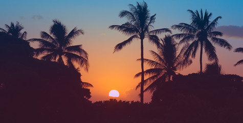 Beautiful tropical sunset and palm trees