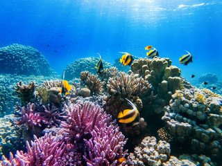 colorful corals and exotic  fishes at the bottom of the red sea. beautiful natural summer background