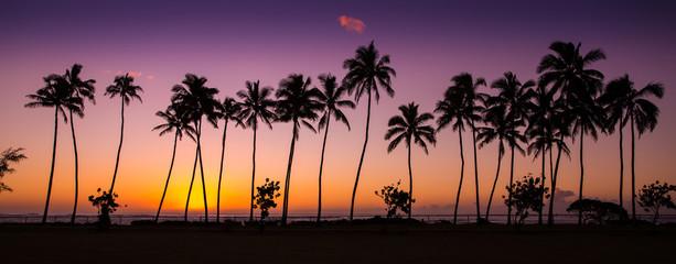 tropical sunrise with palm trees at dawn in the town of Kapaa, Kauai, Hawaii