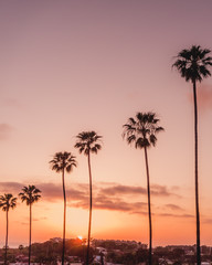 Encinitas, California palm trees at sunset