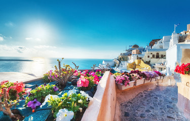 Santorini, Greece. Picturesqe view of traditional cycladic Santorini houses on small street with flowers in foreground. Oia village, Santorini, Greece. Vacations background.