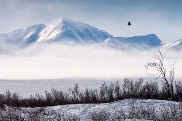 Winter mountain landscape with fog and snowy tundra. A black raven flies in the sky. Harsh Arctic nature. Golden Ridge, Chukotka, Siberia, Far East of Russia.