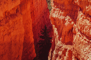 Overview on the Hoodoos in Bryce Canyon National Park
