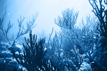 Sea deep or ocean underwater with coral reef as a background. Color of the year 2020. Main color trend concept.