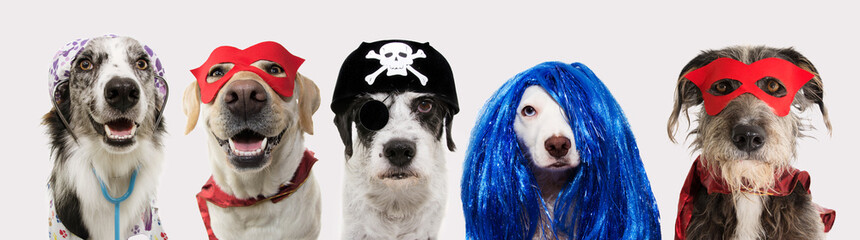 Banner five dogs celebrating carnival, halloween, new year wearing pirate hat, blue wig, red mask, cape and doctor costume. Isolated on white background..