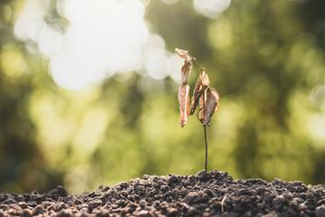 Seedlings on dry soil, concept of global warming.