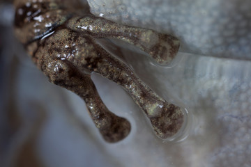 A close up of a frogs foot.