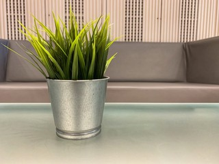 Green plant in steel pot on table in the living room