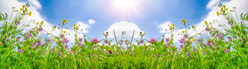 Spring background banner long - Panorama of blooming flowers on spring / summer meadow with sunshine and blue cloudy sky