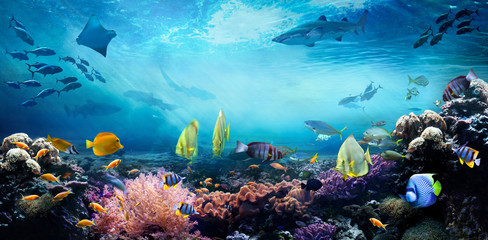 Underwater sea world. Life in a coral reef. Colorful tropical fish. Ecosystem.