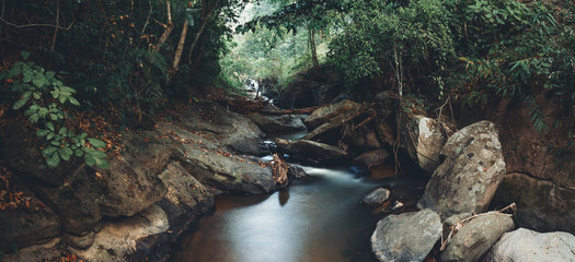 River in nature in the morning