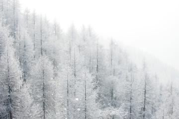 Zimowy krajobraz z lasem