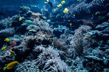 Beautiful underwater world. Sea world with fish and its inhabitants