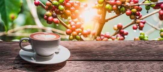 Filiżanka kawy na drewnianej desce z kawowym drzewem na tle dla sztandaru.
