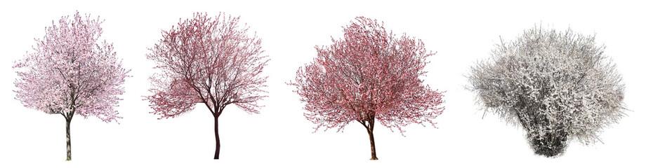 Kolaż z pięknymi kwitnie drzewami na białym tle