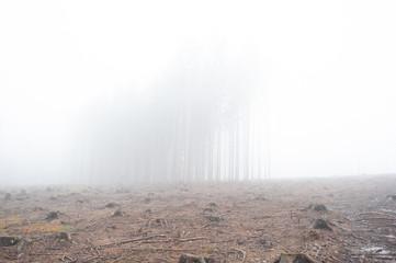 trees in a dense fog