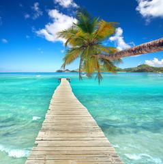 Kokospalme am Meer am Steg
