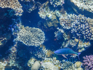 underwater view of red sea