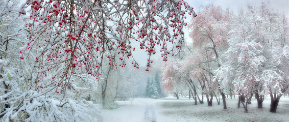 Winter city park at snowfall with red wild apple trees