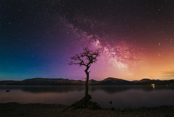 A lone tree with milky way at the shore of Loch Lomond. Trossachs National Park, Scotland, UK