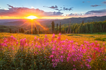 Wildflower sunset in the Colorado Rockies, USA.