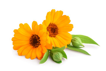 Calendula. Marigold flower with leaves isolated on white background