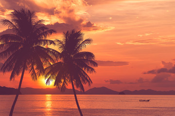tropical palm tree and sea sunset summer background