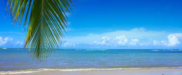 Tropical beach with palm tree branch and Caribbean sea.