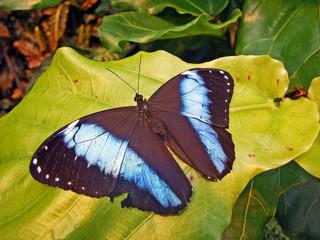 Tropical butterflies in the Butterfly house (tropische Schmetterlinge in dem Schmetterlingshaus, Wien) - Vienna, Austria