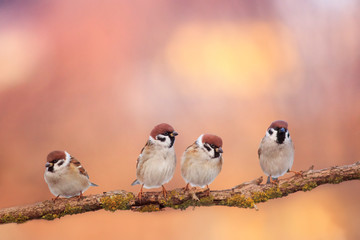 small funny birds sit on a branch in a Sunny spring garden