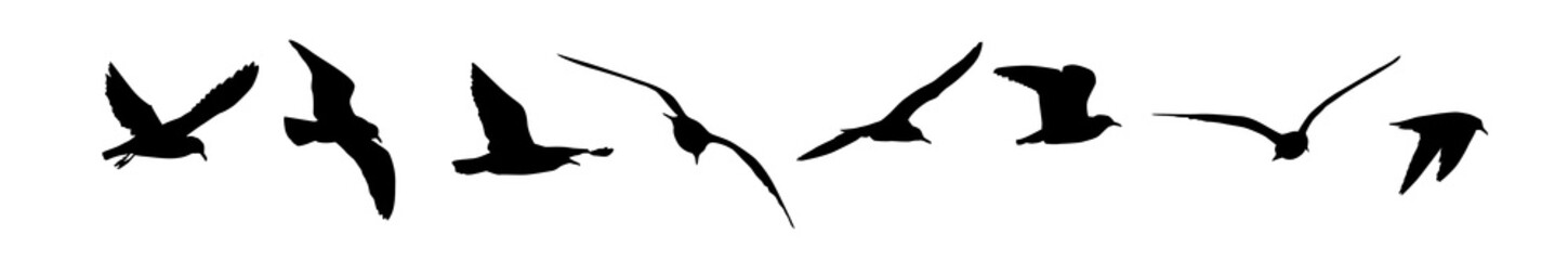 A set of silhouettes of seagulls. Vector illustration