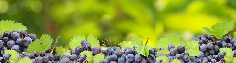 Grapes from your favorite garden