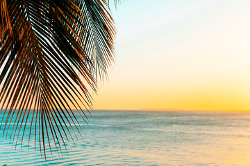 Coconut palm trees on beach at sunset.
