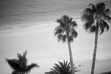 palm, beach, sunset, tree, tropical, sea, ocean, palms, sun, landscape, summer, nature, island, water, sand, palm tree, silhouette, sunrise, trees, travel, coconut, vacation, black and white