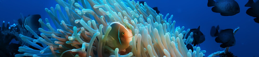scena podwodna / rafa koralowa, świat dzikiej przyrody oceanu