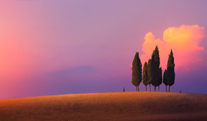 Beautiful nature countryside landscape; farm field and cypress trees over sunset sky