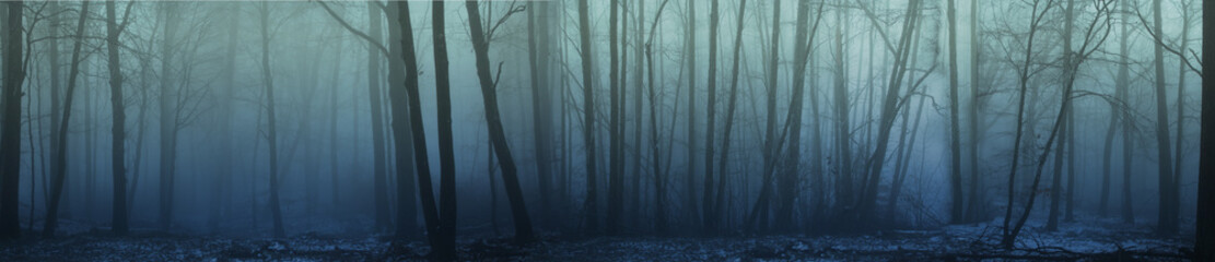 panorama of forest fog in the winter forest, mysterious mystical landscape of greenish color