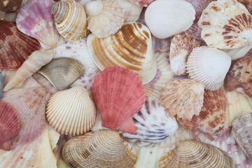 Many different seashells piled together