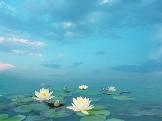Beautiful summer landscape with white lilies. Lake with water lily flowers. Nymphaea reflection in the pond.