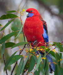 Close-Up Of Red Bird Perching On Tree